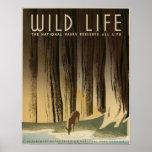 Wildes Leben konservieren die Nationalparks alles  Posterdruck