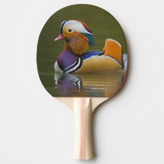 Wildes Mandarinen-Enten-AIX galericulata) auf Tischtennis Schläger