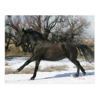 Wildes Mustang-Pferd im Schnee 2 Postkarte