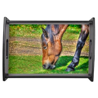 Wildes neues Waldpony Pferd-Liebhaber Natur-Foto Tablett