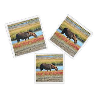 Wildes Pferd, das in The Field isst Acryl Tablett