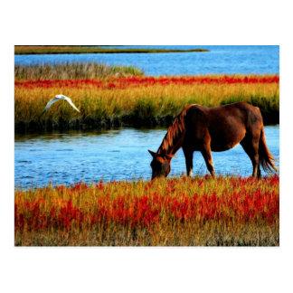 Wildes Pferd Postkarte