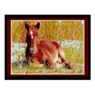 Wildes Pferdefohlen Postkarte
