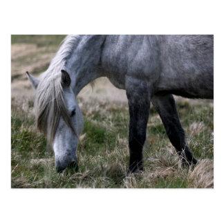 Wildes Pony auf Dartmoor, Devon Postkarte
