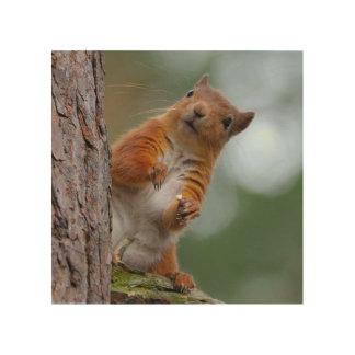Wildes rotes Eichhörnchen im schottischen Holzleinwand