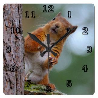 Wildes rotes Eichhörnchen im schottischen Quadratische Wanduhr