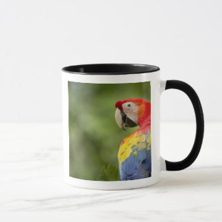 Wildes Scharlachrot des Macaw, Regenwald, Costa Tasse