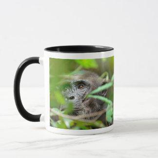 Wildes Schauen des Schimpanse-(PanTroglodytes) Tasse