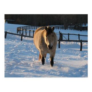 Wildleder im Schnee Postkarte