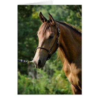 Wildleder-Morgan-Pferd Karte
