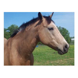 Wildleder-Mustang-Postkarte Postkarte