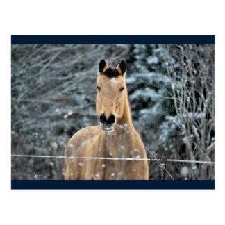 Wildleder-Pferdewinter Postkarte