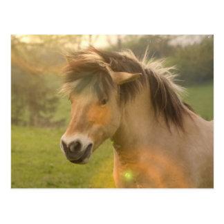 Wildleder-Pony-Postkarte Postkarte
