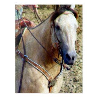 Wildleder-Rodeo-Pferd Postkarte
