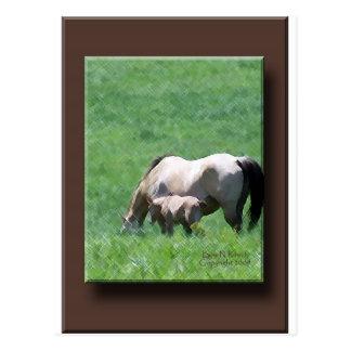 Wildleder-Stute und Fohlen Postkarte