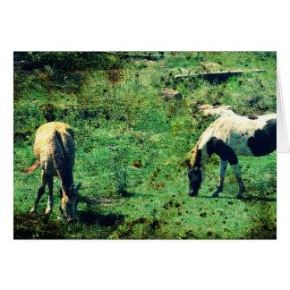 Wildleder und Pinto Karte