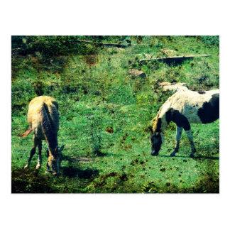 Wildleder und Pinto Postkarte