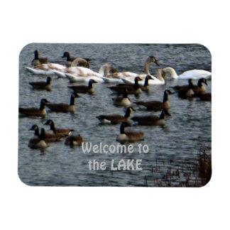 Willkommen zu den See-Gans-Schwänen Magnet
