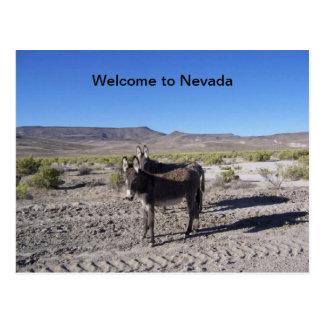 Willkommen zu Nevada-Postkarte mit 2 Burros Postkarte