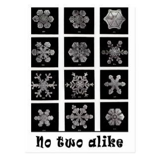 Wilson Bentleys Snowflakes, 1902 Postkarte