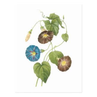 Winde (Spomaea quamoclit) durch Redouté Postkarte