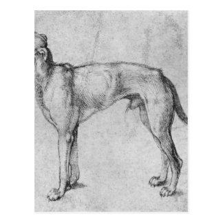 Windhund durch Albrecht Durer Postkarte