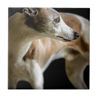 Windhund Keramikfliese