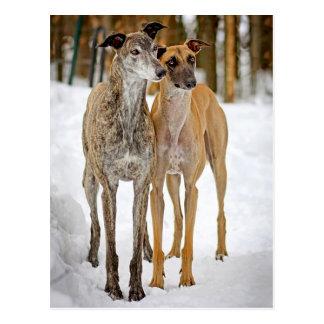 Windhund-Welpen-Hunde Brindle und TAN-Aufkleber Postkarte