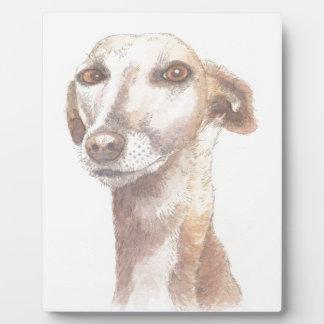 Windhundporträt Fotoplatte