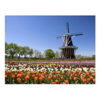 Windmühlen-Inselpark mit Tulpen in der Blüte an Postkarte