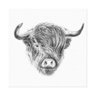 Windswept Straggly schottische Hochland-Kuh Leinwanddrucke