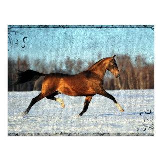 Winter Akhal-teke Postkarte