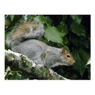 Winter-Eichhörnchen #2 Postkarte