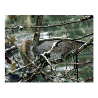 Winter-Eichhörnchen Postkarte
