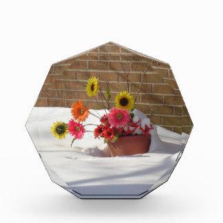 Winter-Frühlings-Gänseblümchen Acryl Auszeichnung