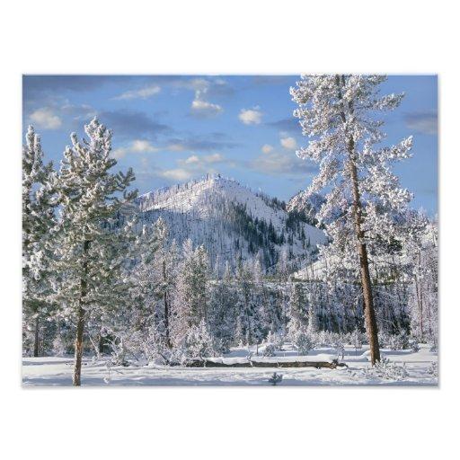 Winter in Yellowstone Nationalpark, Wyoming Foto