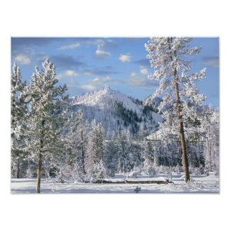Winter in Yellowstone Nationalpark, Wyoming Kunstfoto