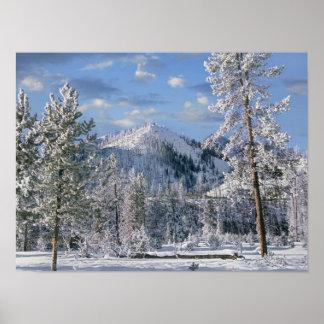 Winter in Yellowstone Nationalpark, Wyoming Poster