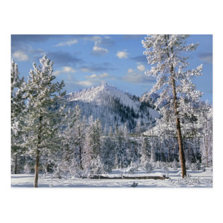 Winter in Yellowstone Nationalpark, Wyoming Postkarte