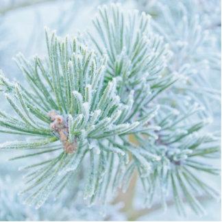 Winter-Kiefer Fotoskulptur Ornament