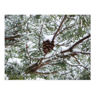 Winter-Natur-Fotografie des Snowy-Kiefern-Kegel-II Postkarte