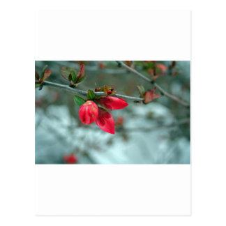 Winter Redbud Postkarte