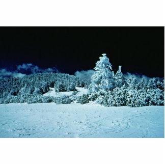 Winter-Wald Photostatue