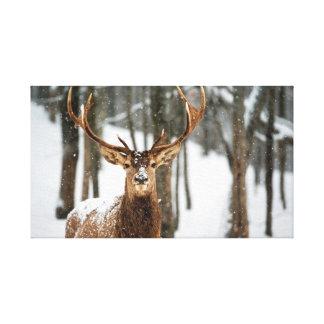 Winter-Waldrotwild Leinwanddruck