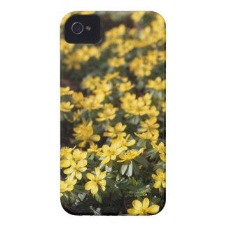 Winterakonit (Eranthis hyemalis) iPhone 4 Hülle