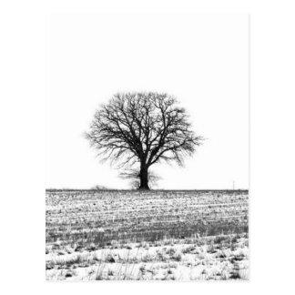 Winterbaum Postkarte