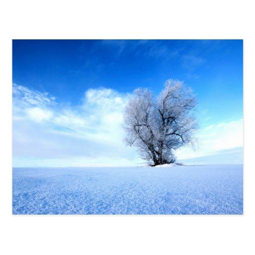 Winterbaum Postkarten