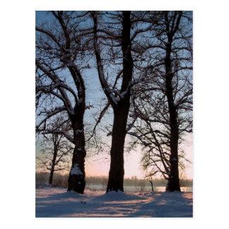 Winterbäume auf Hintergrund des blauen Himmels Postkarten
