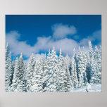 Winterbäume, Steamboat, Colorado, USA Poster