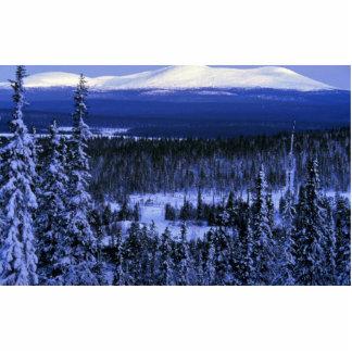 Winterszene in Olostunturi vom Wald Photofigur